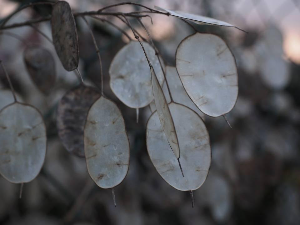 Однолетние цветы — основные типы и особенности посадки + 108 фото