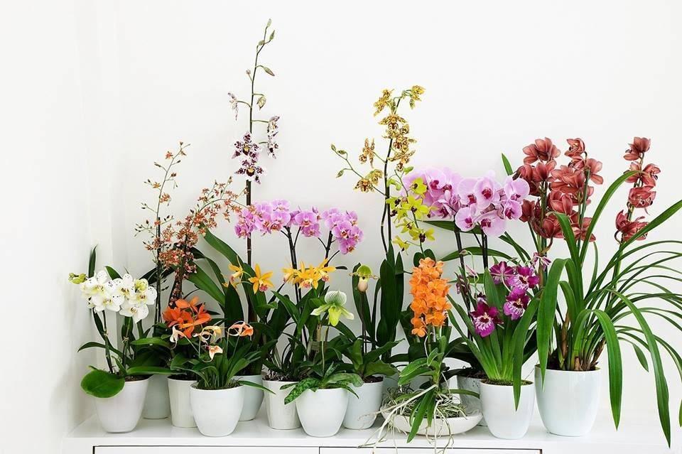 Орхидеи фиолетового цвета: названия видов и сортов, их фото и характеристика, а также описание нюансов ухода, подкормки, пересадки и размножения