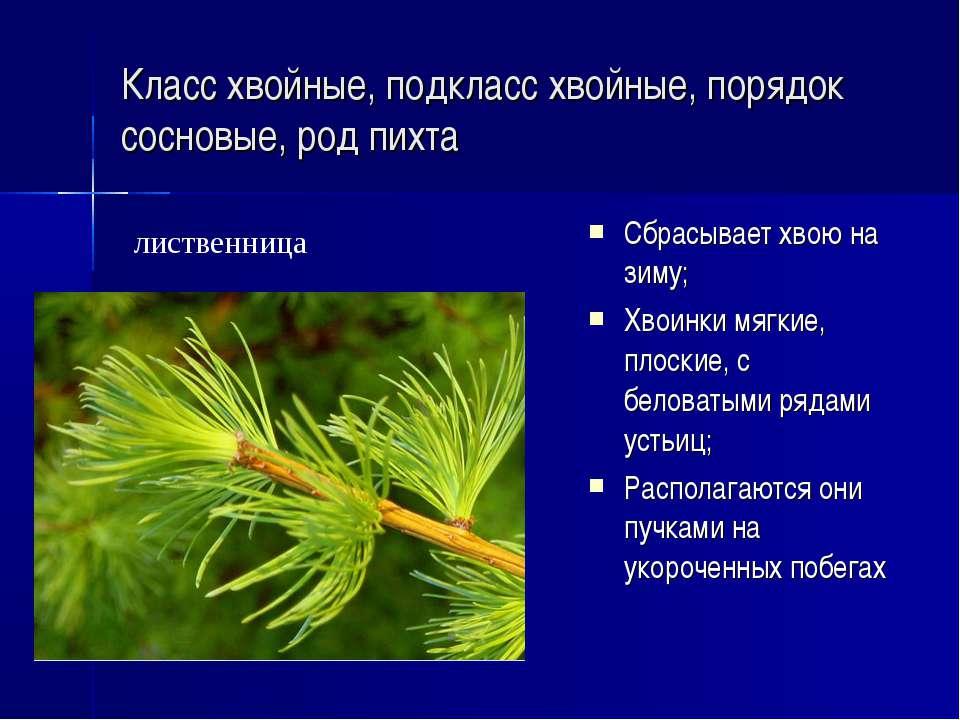 Дикая мята — что за растение, разновидности