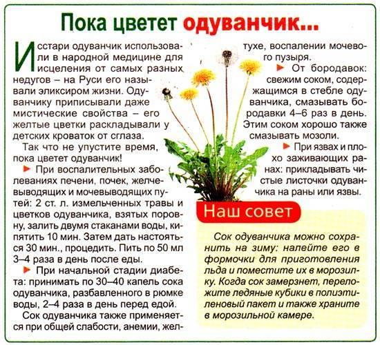 Крестовник (якова) обыкновенный: описание растения с фото, лечебные свойтсва