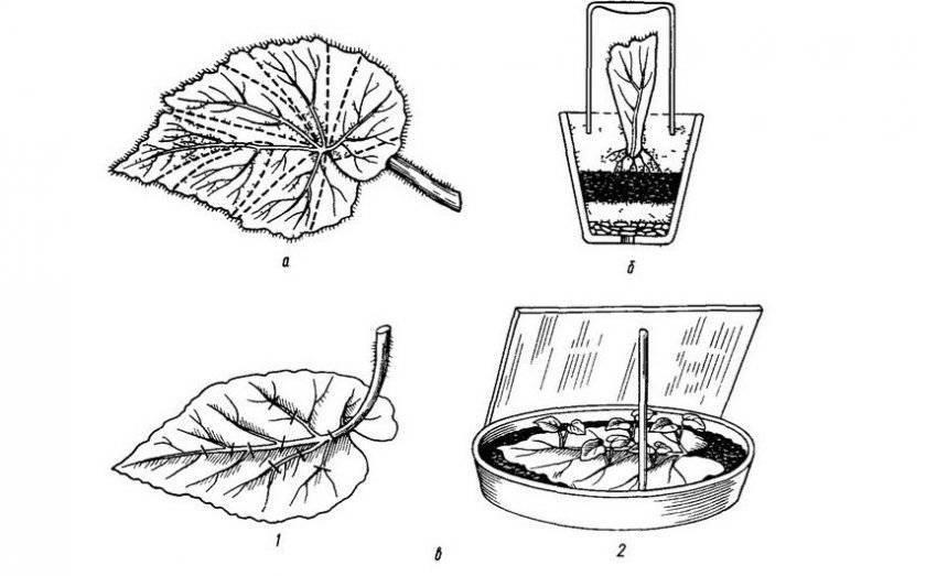 Особенности ухода за кактусами весной и летом - энциклопедия цветов
