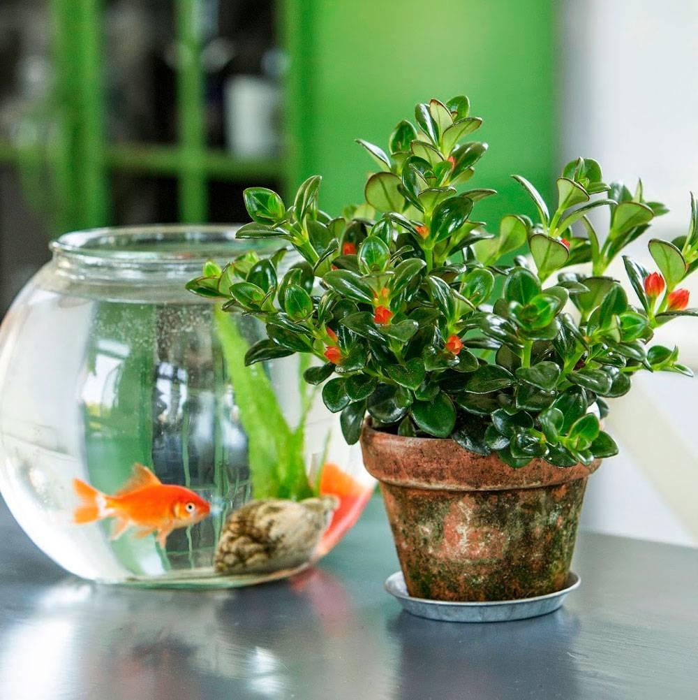 Гипоцирта: фото, виды и способы ухода за цветком в домашних условиях