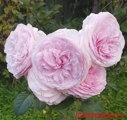 «мэри роуз» (mary rose) 1510 год – гордость генриха vii