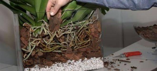 """Субстрат для орхидей: что это такое, для чего необходим и как им пользоваться при выращивании, а также перечень компонентов, входящих в состав """"сады аурики"""""""