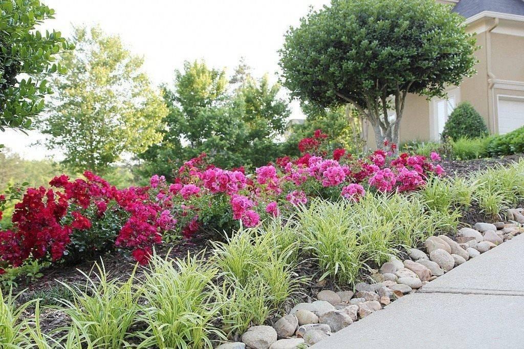 Подбор цветущих кустарников для подмосковья, сибири, урала