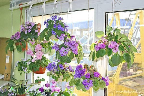 Какие полезные комнатные растения и цветы можно держать в спальне, чтобы не навредить здоровью?