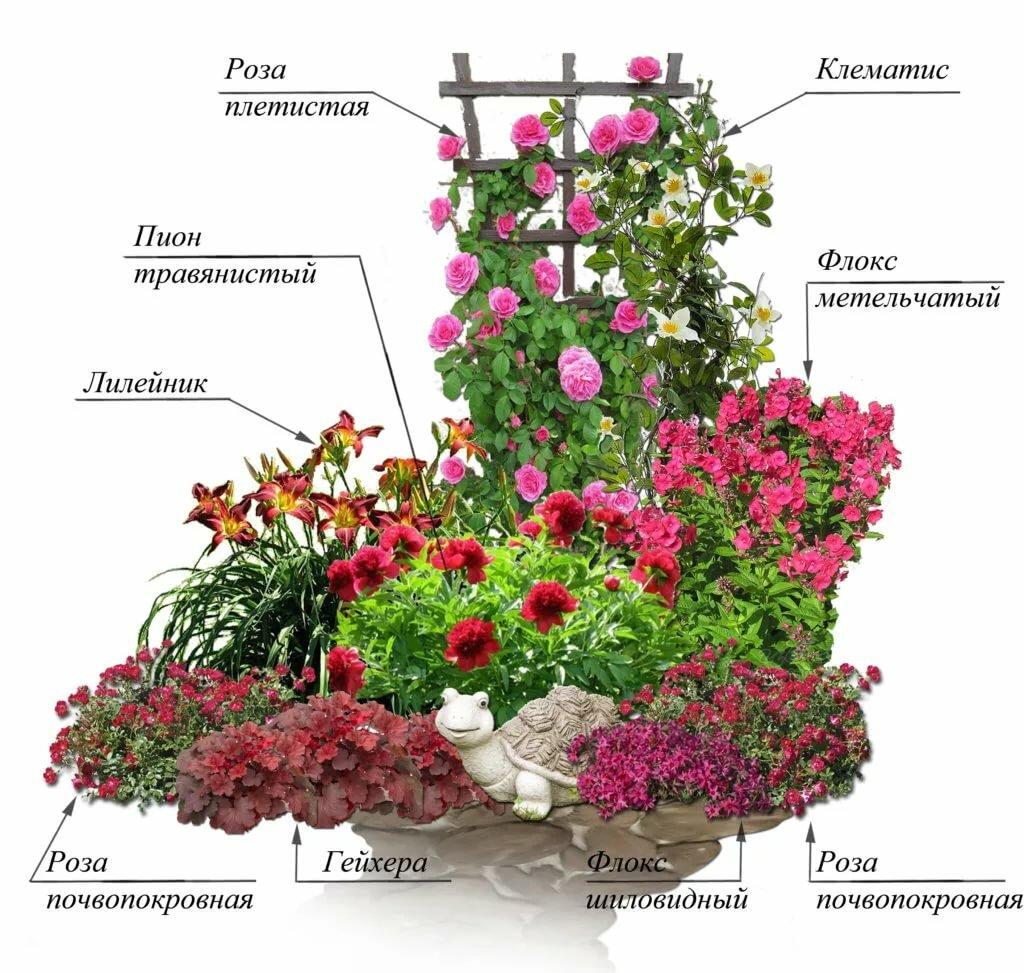 Клумба с пионами — сочетание растений в цветнике