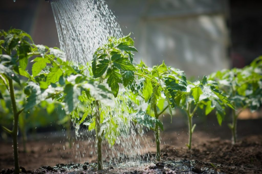 Популярные разновидности асплениума и требования для выращивания дома