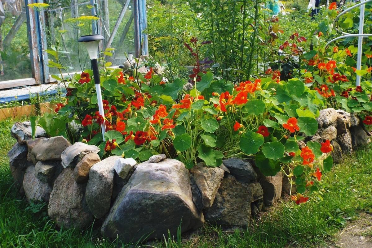 Всё о каллах, посадке и уходе в открытом грунте, выращивание в саду весной