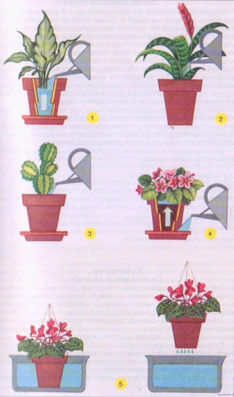 Как выбрать лучшее время для полива сада: 7 шагов