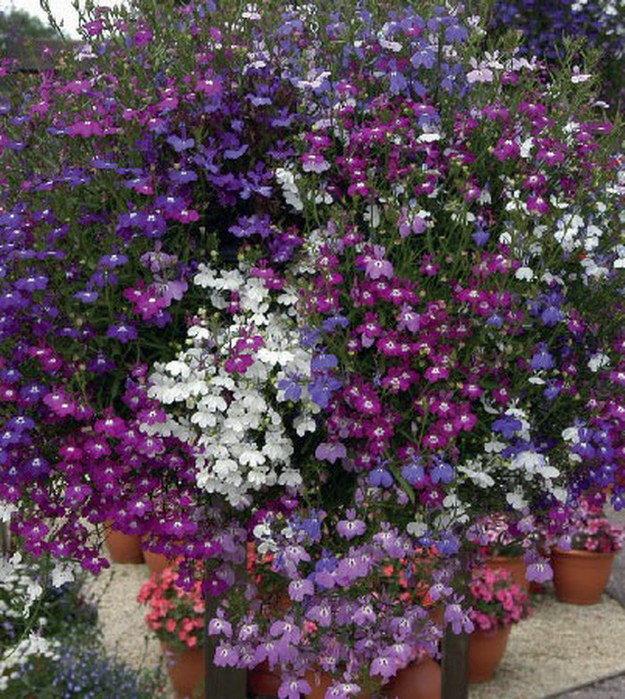 8 красивых ампельных растений для сада
