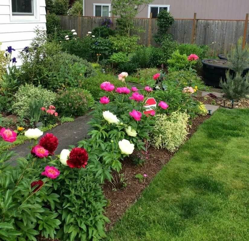 композиции с пионами в саду фото трахает мою