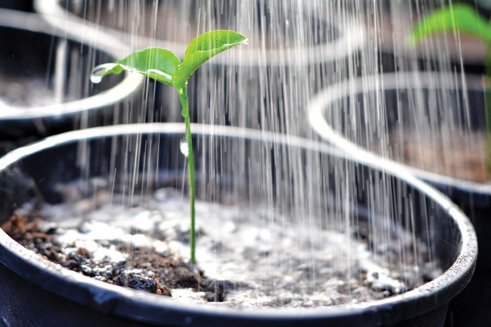 Условия пересадки цикламена дома и правила ухода: полив, влажность, почва и другие