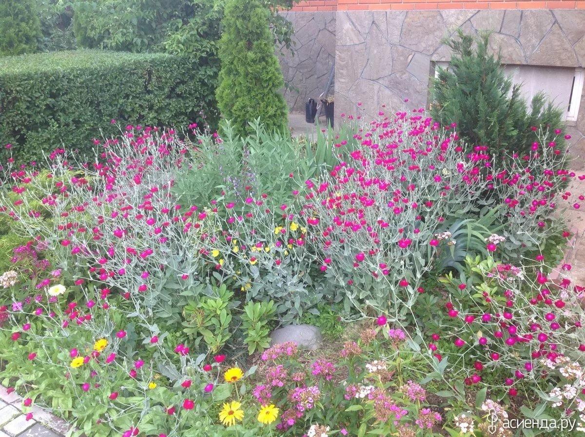 Можно ли высаживать каланхоэ в открытый грунт на лето? можно ли высадить каланхоэ в... - ответ по животные и растения
