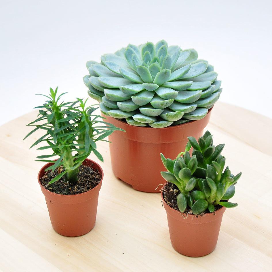 неприхотливые домашние растения фото и названия этих