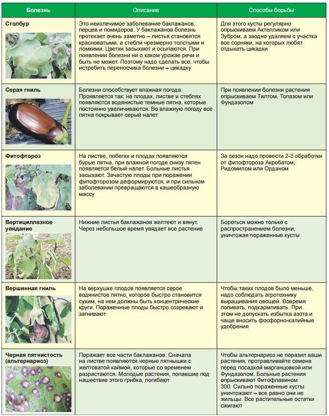 Защита многолетних цветов от болезней и вредителей