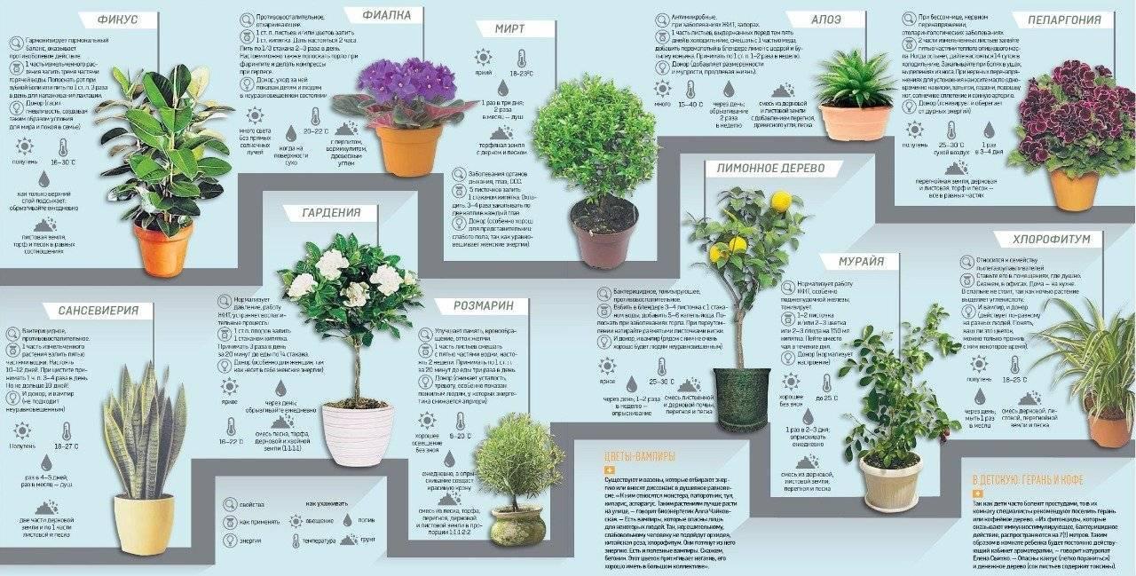 Бувардия: описание видов и уход - энциклопедия цветов
