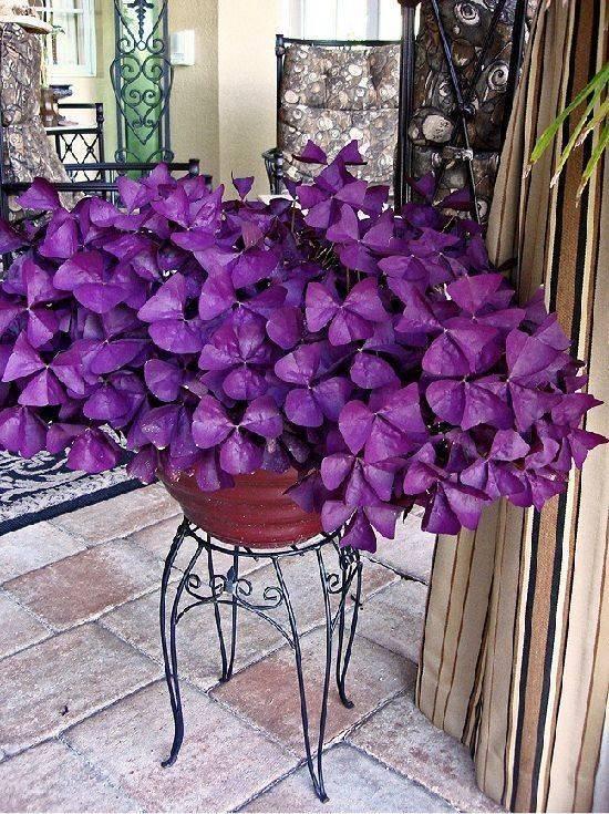 Выбираем фиолетовые цветы–многолетники для своего сада