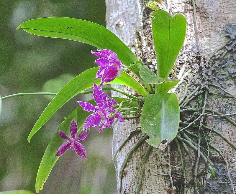 Правила подбора грунта при выращивании орхидеи фаленопсис. как сделать субстрат самому?