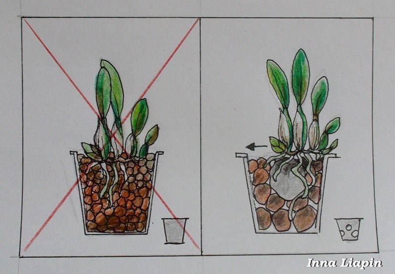 Как пересадить орхидею в другой горшок в домашних условиях: можно ли из маленького в кашпо побольше или в непрозрачное, или стеклянную емкость, в какую правильно?