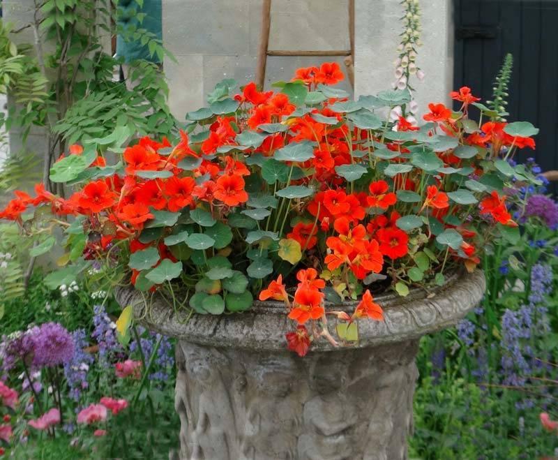Сажаем цветы на балконе в ящиках   красивый дом и сад