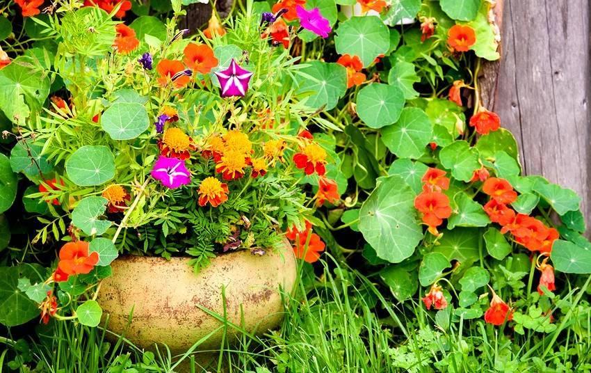 Уход за декоративным папоротником в саду: как посадить на даче в открытом грунте