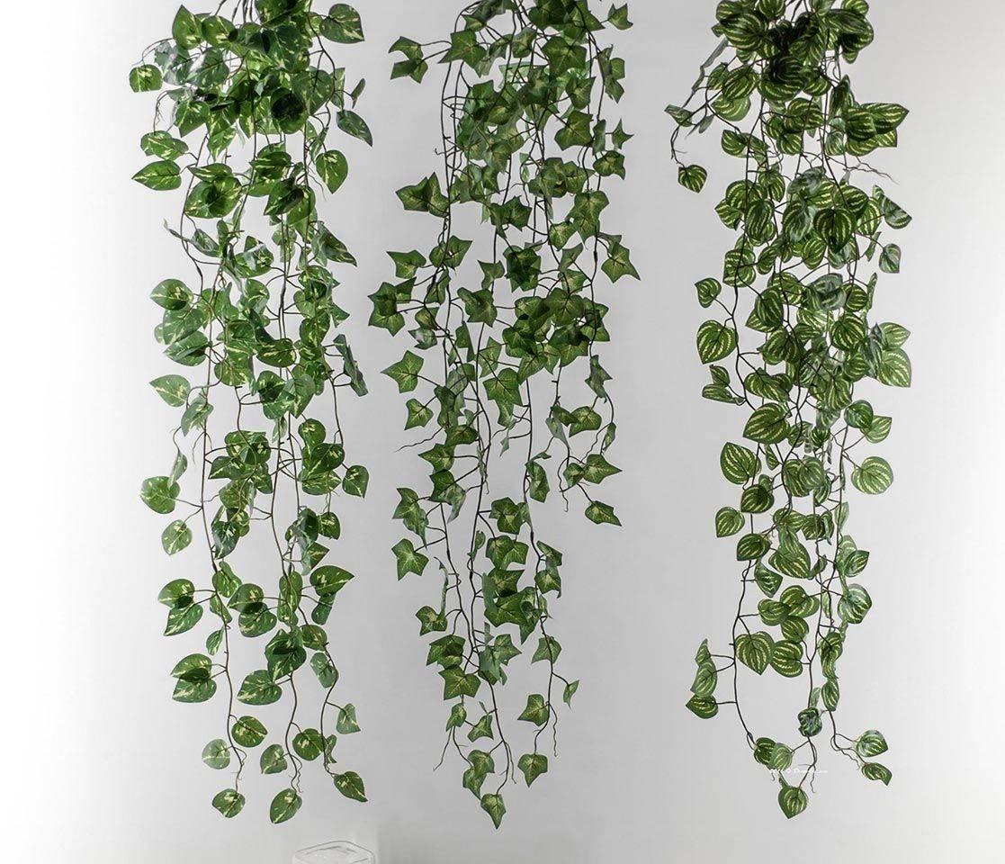 Вьющиеся комнатные растения: описание видов и секреты ухода