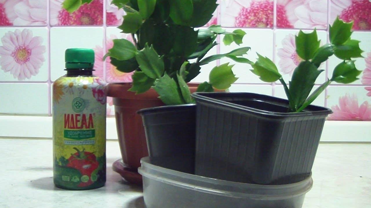Варианты чем можно удобрить и полить цветы для быстрого и благоприятного цветения