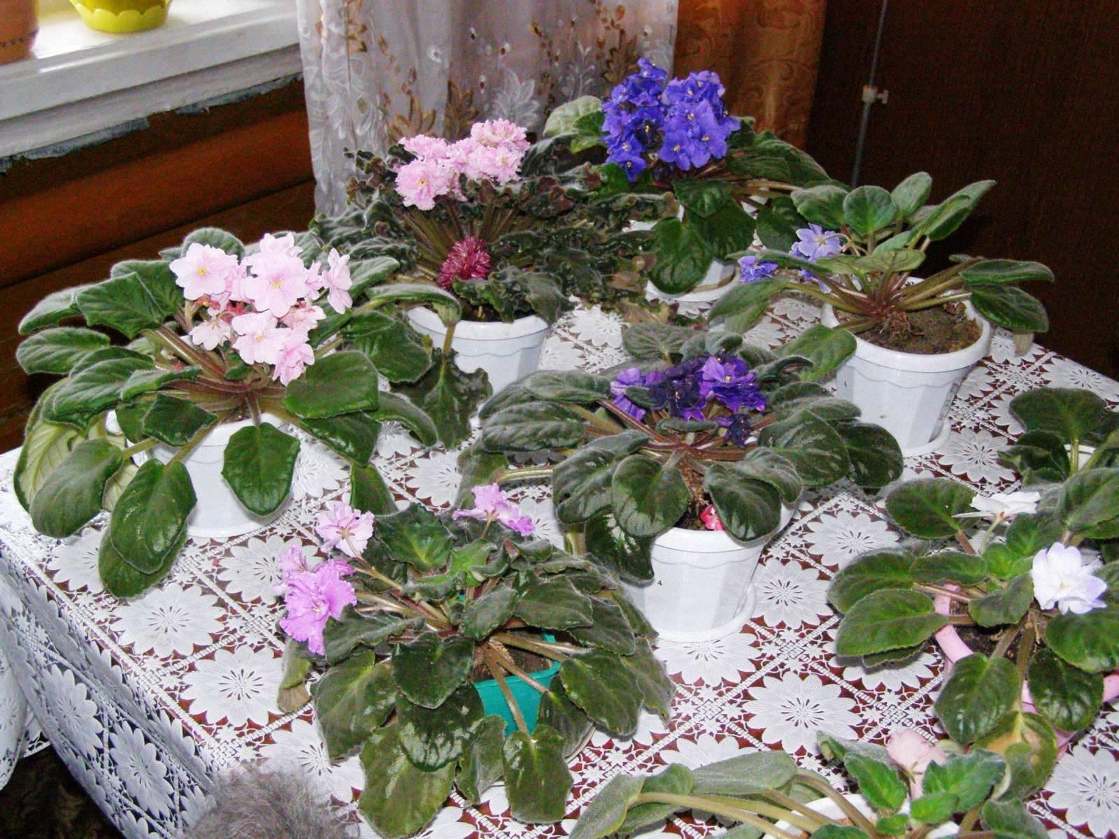 Цветы и растения в спальне