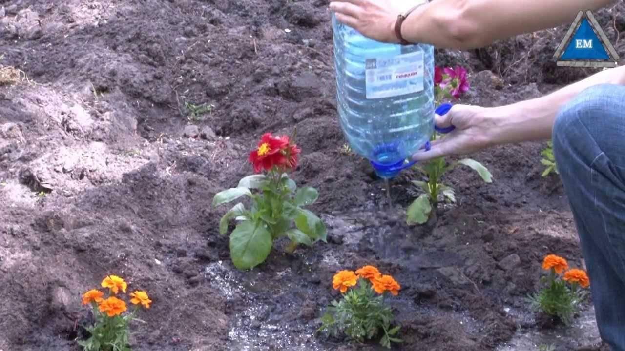 Когда сеять бархатцы на рассаду - сроки посадки и правильный уход за рассадой