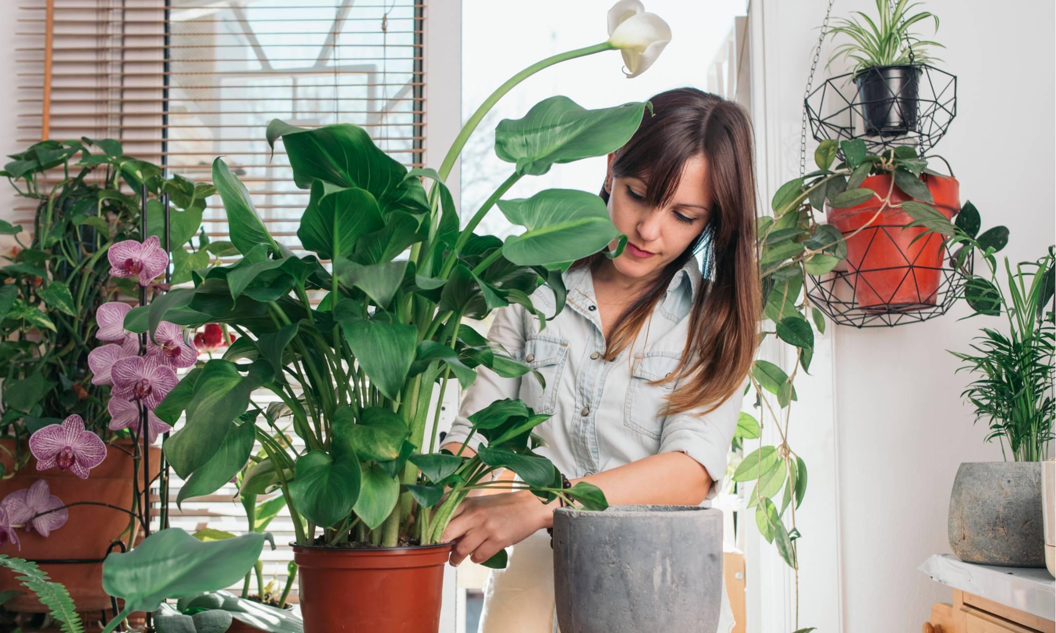 Как ухаживать за кактусами в домашних условиями