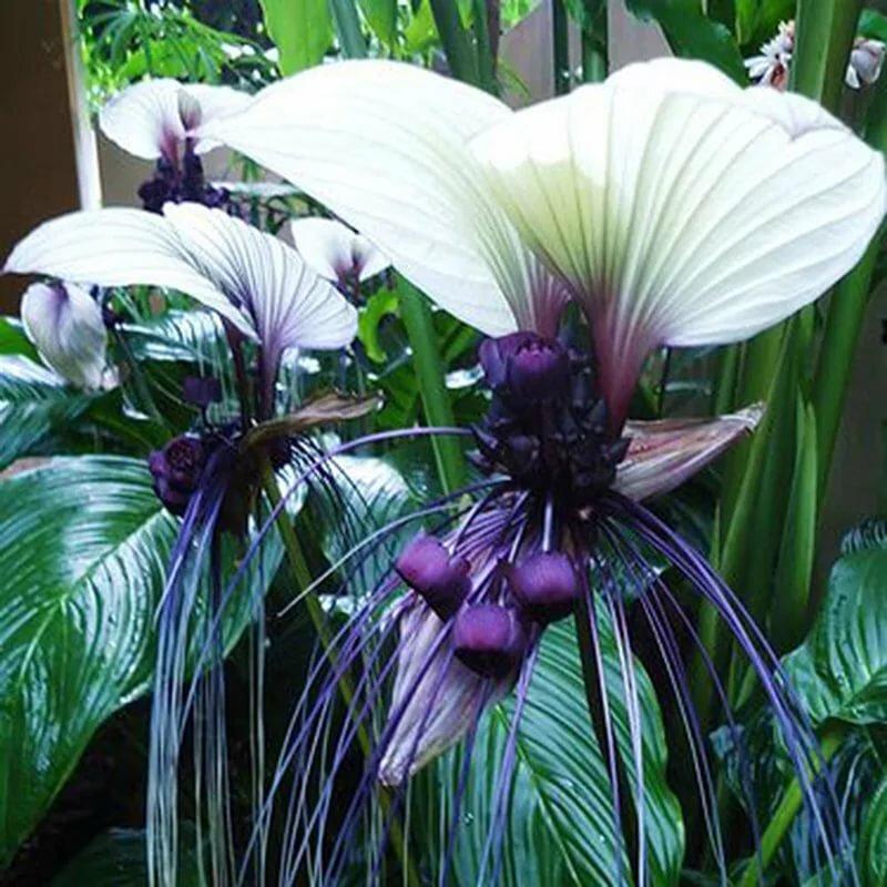 Растения для выращивания дома, все виды красивых популярных комнатных цветов