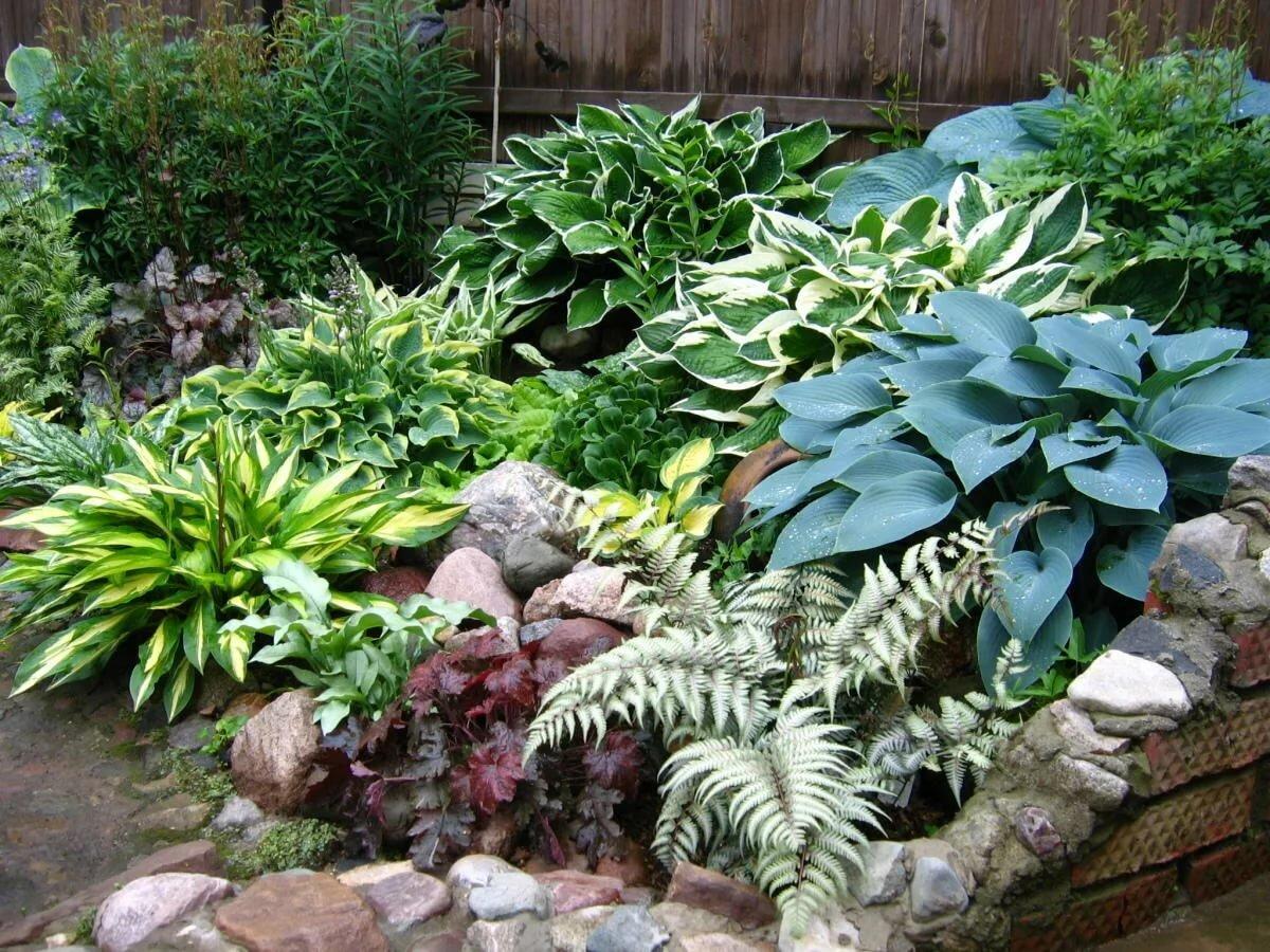 Используем хосты для украшения: секреты успешного дизайна сада