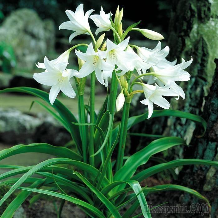 Цветы, похожие на лилии, только маленькие