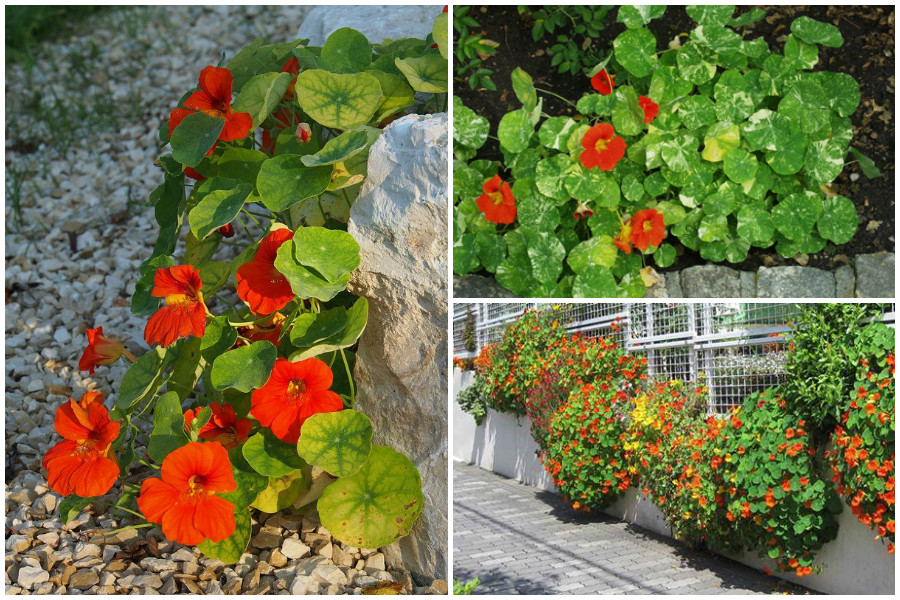 Какие цветы можно выращивать летом на балконе (южном, северном, западном, восточном)