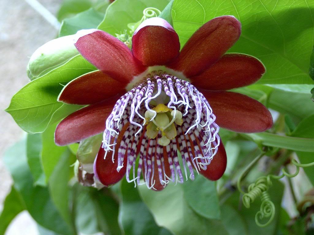 Самые необычные цветы в мире топ 30