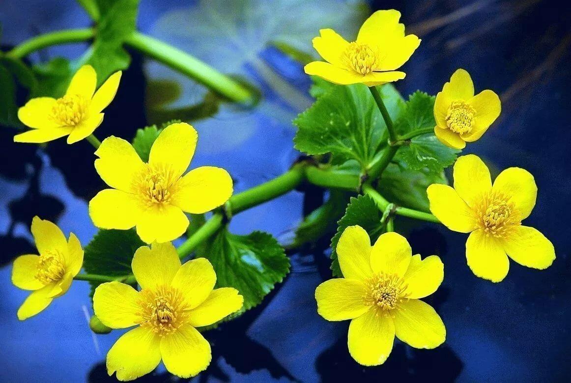Цветок женское счастье приметы и суеверия фото культивируются