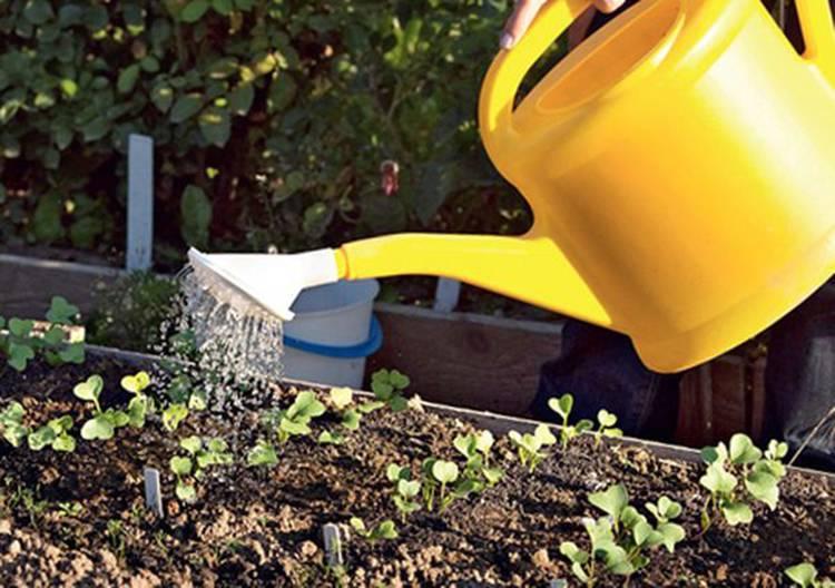 Описание популярных сортов барбариса и их выращивание: оранж санрайз, конкорд, ред леди