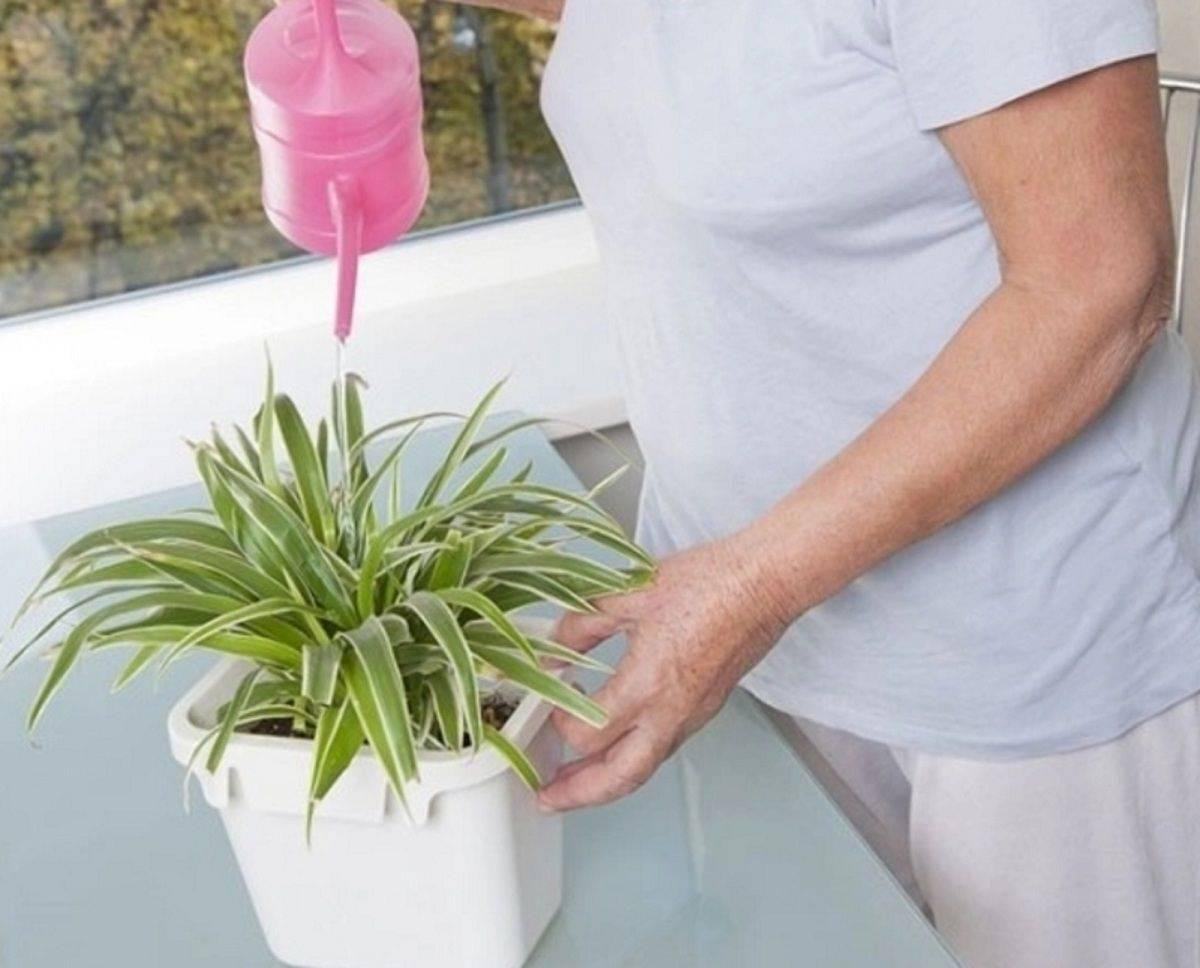 Как ухаживать за алоэ в домашних условиях