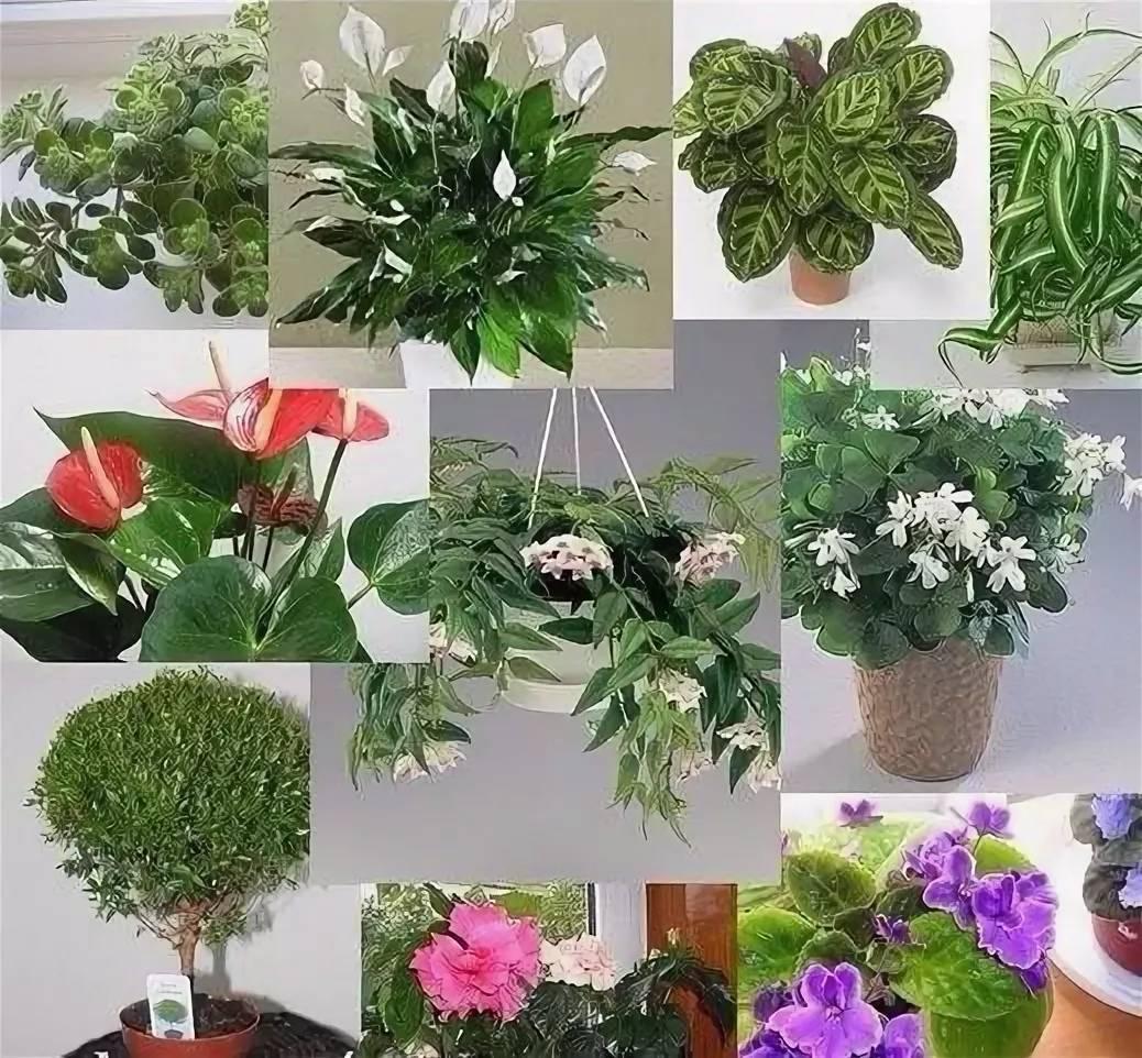 Цветок любви: какие комнатные растения приносят в дом семейное счастье и благополучие