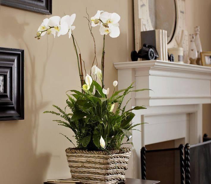 Откроем тайну, можно ли держать орхидею дома