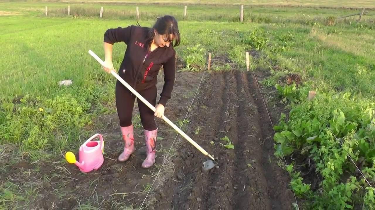 Применение люпина как сидерата: как сеют и когда закапывают, чем подкармливают