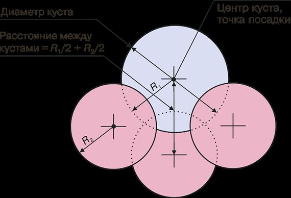 Посадка роз в открытый грунт — пошаговая инструкция