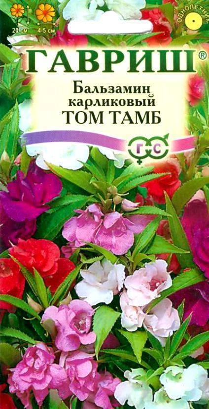 Бальзамин Том Тамб — выращивание из семян в домашних условиях