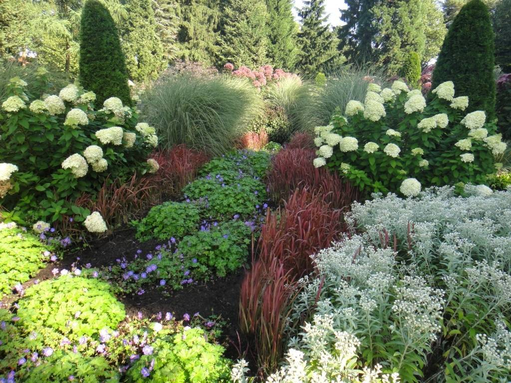 Удачное соседство: как правильно сочетать цветы на клумбе