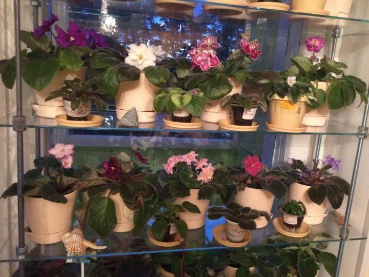 Какие комнатные цветы можно выносить на улицу летом