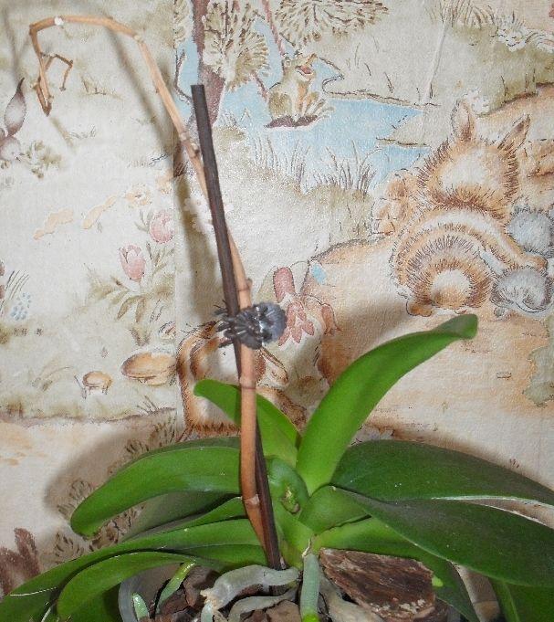 Как обрезать орхидею после цветения – основные правила обрезки цветоноса, воздушных корней и листьев в домашних условиях