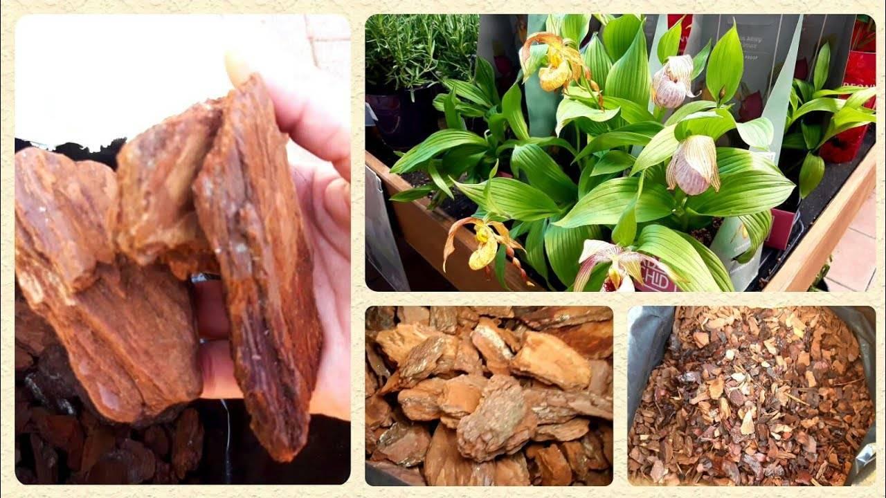Варианты выращивания и укоренения деток на цветоносе: примеры что можно сделать