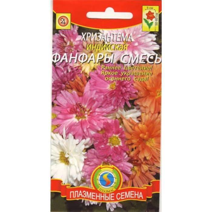 Индийская хризантема — выращивание из семян, уход в саду