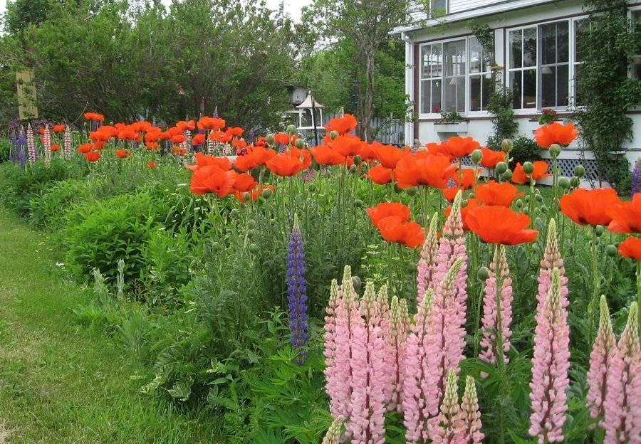 Многолетние декоративные цветы для дачи и сада